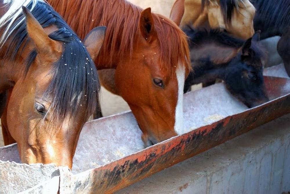 Nutrition du cheval