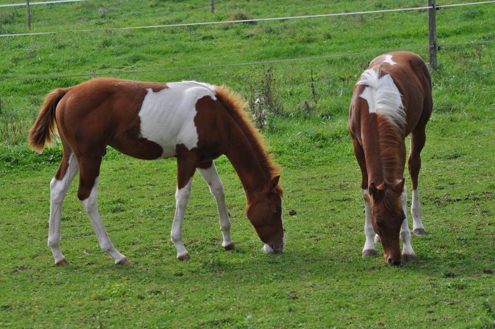 Pension pour chevaux en Lorraine