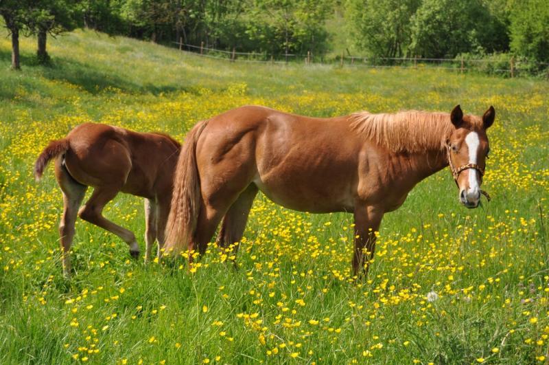 Pouliche Nutka Moka Quarter Horse